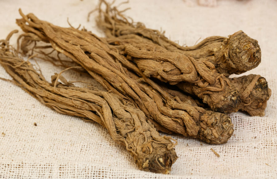 Angelika čínská kořen